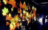 秋テーマ 光の幻想世界 県立美術館 和紙に紅葉や月投映 28日まで