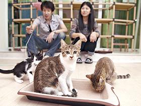 癒しを求めて駅前猫カフェ