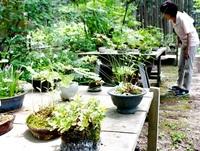 山野草の愛好家が寄せ植えなど80点 美浜で展示