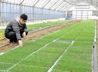 転換期迎えた稲作 稼げる農業確立急務 「個人農家、悪条件の農地も見捨てないで」 ふくいの岐路_19統一地方選(4)