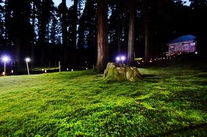 平泉寺のコケ、ライトアップ