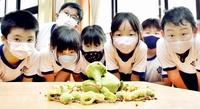 """朝は一礼…小学生が教室に祭る驚きのオクラ """"守り神""""として机に鎮座 福井"""